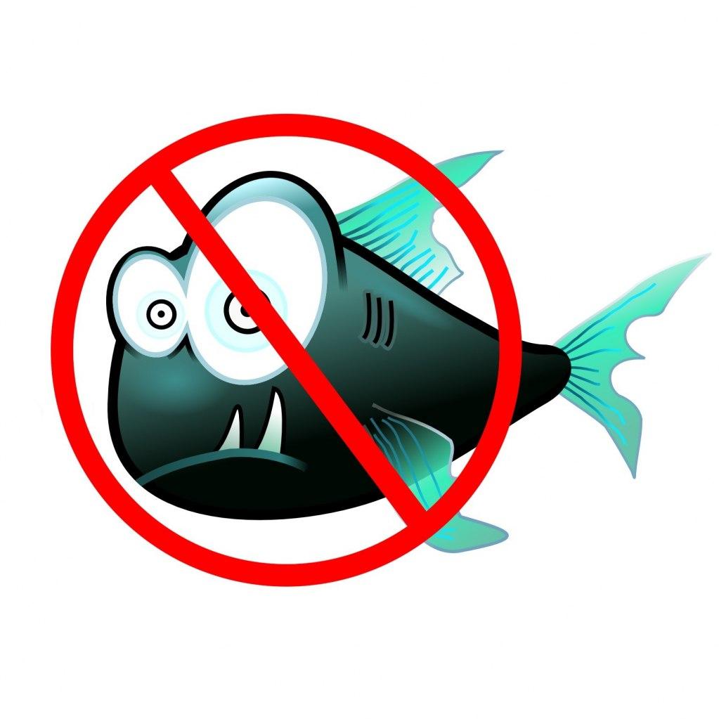 Новое в правилах рыболовства. Закон о рыбалке 2019-2020